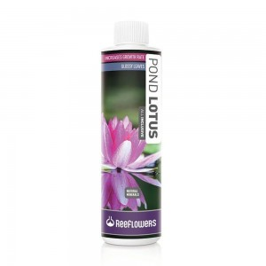 Pond Lotus 500ml Reeflowers